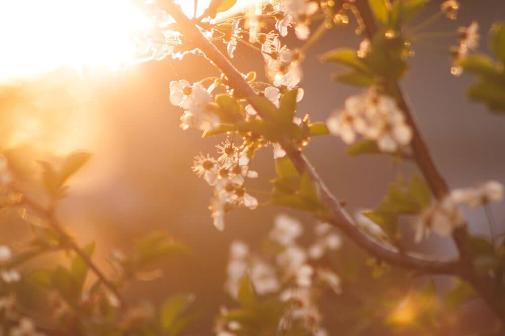 Fotografía en primavera con el atardecer.